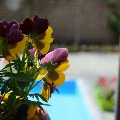photo_2017-07-09_16-04-51